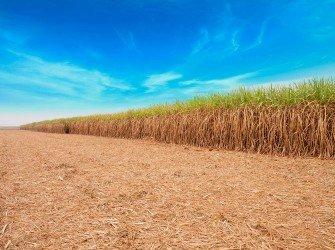 Tratamento Nutricional para Cana-de-Açúcar Aumente a produtividade da sua lavoura com o nosso tratamento