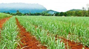 Ipea eleva previsão para o crescimento do PIB agropecuário em 2020